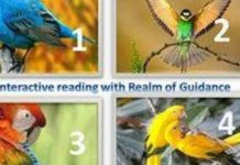 Free Online Oracle readings Part 3